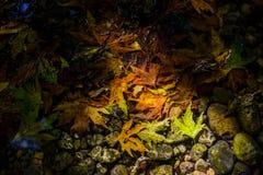 Bladeren in een stroom Royalty-vrije Stock Afbeelding