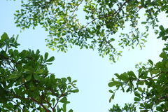 Bladeren en blauwe hemel Stock Foto