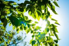 bladeren en blauwe hemel met zon Royalty-vrije Stock Afbeeldingen