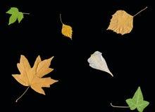 Bladeren en bloemblaadjes Royalty-vrije Stock Afbeeldingen