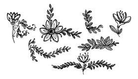Bladeren en bloemenornamenten 1 stock afbeelding