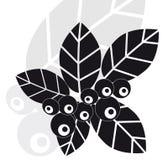 Bladeren en bosbessenbessen Stock Afbeelding