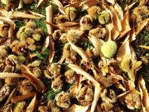 Bladeren en conkers Stock Foto's