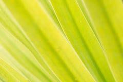 Bladeren en daglicht Royalty-vrije Stock Foto's