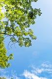 Bladeren en de zon royalty-vrije stock fotografie