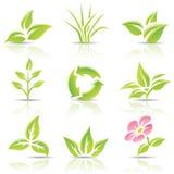Bladeren en een bloem Royalty-vrije Stock Afbeelding