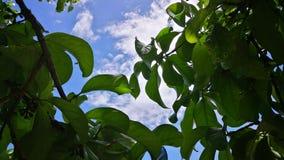 Bladeren en hemel Royalty-vrije Stock Fotografie