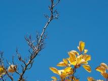 Bladeren en hemel Stock Afbeelding