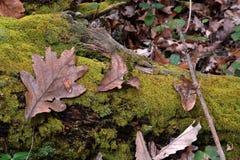 Bladeren en mos Royalty-vrije Stock Afbeeldingen