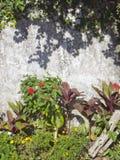 Bladeren en muur Stock Fotografie
