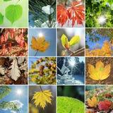 Bladeren en naalden in de vier seizoenen royalty-vrije stock fotografie