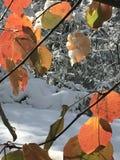 Bladeren en sneeuw royalty-vrije stock afbeelding