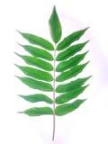 Bladeren en stokken Royalty-vrije Stock Fotografie