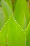 Bladeren en textuur Royalty-vrije Stock Afbeelding