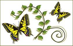 Bladeren en vlinders Stock Fotografie