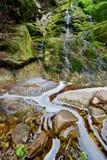 Bladeren en water royalty-vrije stock afbeeldingen