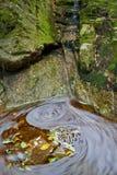Bladeren en water stock fotografie