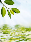 Bladeren en water Stock Afbeelding