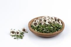 Bladeren en zaden Bittere komkommer-Chinees (Moringa oleifera Lam.) Stock Foto's