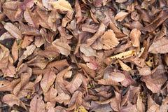 Bladeren geschoten ideaal voor achtergronden en texturen stock fotografie