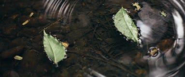 Bladeren gevallen aan een vijver Stock Afbeelding