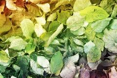 Bladeren Gevallen onderaan de Grond Stock Afbeeldingen