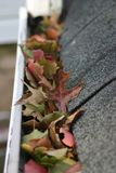 Bladeren in goot #3 stock fotografie