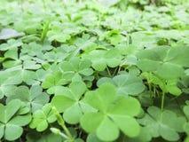 Bladeren groen in de aard Stock Afbeelding