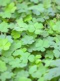 Bladeren groen in de aard Stock Foto's