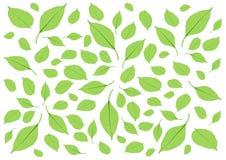 Bladeren Groen patroon en Vele bladeren op witte illustratie als achtergrond royalty-vrije illustratie
