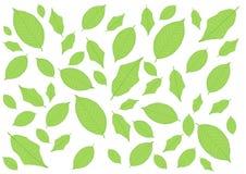 Bladeren Groen patroon op witte achtergrond stock illustratie