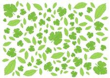 Bladeren Groen patroon Vele bladeren Verse bladeren stock illustratie