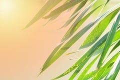 bladeren groene boom Royalty-vrije Stock Afbeeldingen
