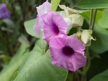 Bladeren hart-Shaper Purpere Bloemen stock afbeelding
