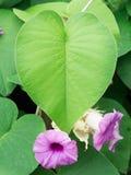 Bladeren hart-Shaper Purpere Bloemen royalty-vrije stock foto's