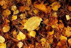 Bladeren herfst Royalty-vrije Stock Afbeelding