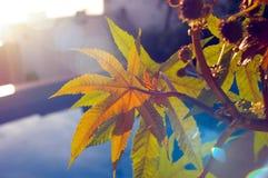 Bladeren in het avond licht Royalty-vrije Stock Afbeeldingen
