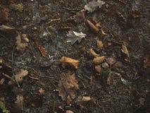 Bladeren in het bos stock foto's