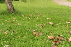 Bladeren het dalen Stock Foto's