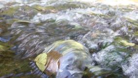 Bladeren in het water stock video