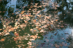 Bladeren in het water Stock Foto's