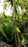 Bladeren in het zonlicht Royalty-vrije Stock Foto