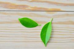 Bladeren houten achtergrond Stock Fotografie