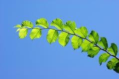Bladeren met blauwe hemel stock afbeelding