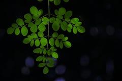 Bladeren met bokeheffect Royalty-vrije Stock Afbeelding