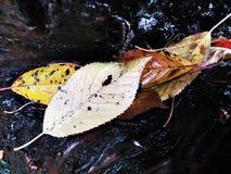 Bladeren met boom als achtergrond Royalty-vrije Stock Foto