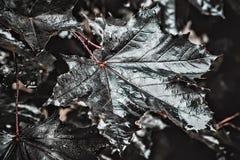 Bladeren met de close-up van waterdalingen Royalty-vrije Stock Afbeelding