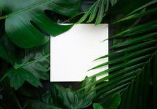 Bladeren met exemplaar ruimteachtergrond Tropische Botanisch royalty-vrije stock afbeelding