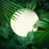Bladeren met exemplaar ruimteachtergrond Tropische Botanisch royalty-vrije stock foto's