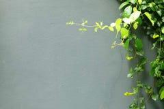 Bladeren met Gray Concrete Background stock foto